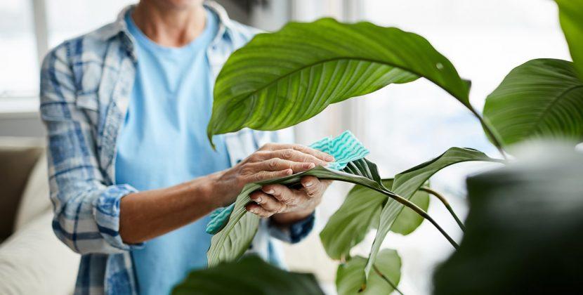 Czyszczenie roślin – 3 metody