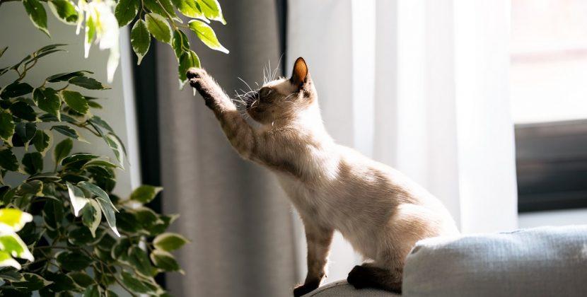 Rośliny doniczkowe bezpieczne dla kota